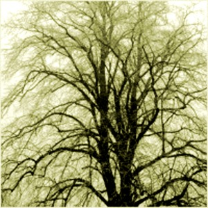 J winter_tree_