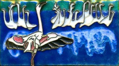 WLesser Flamingo Africa